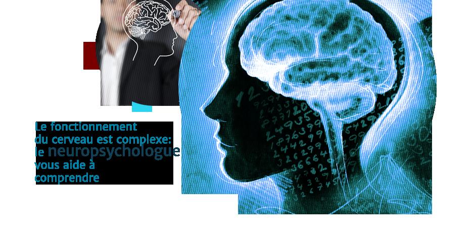 Le fonctionnement du cerveau est complexe: le neuropsychologue vous aide à  comprendre